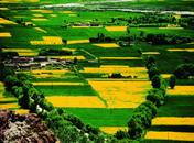 西藏最早的农田